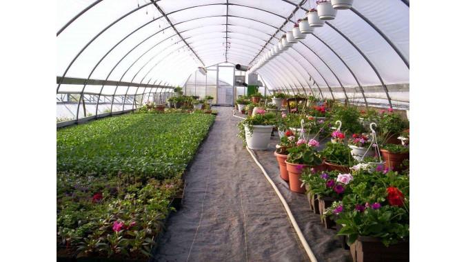 Hoop Style Greenhouse